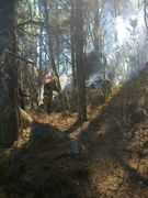 Forestales 2014