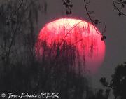 Die dunklen Stunden der Sonne