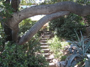 Stairs of Echo Park
