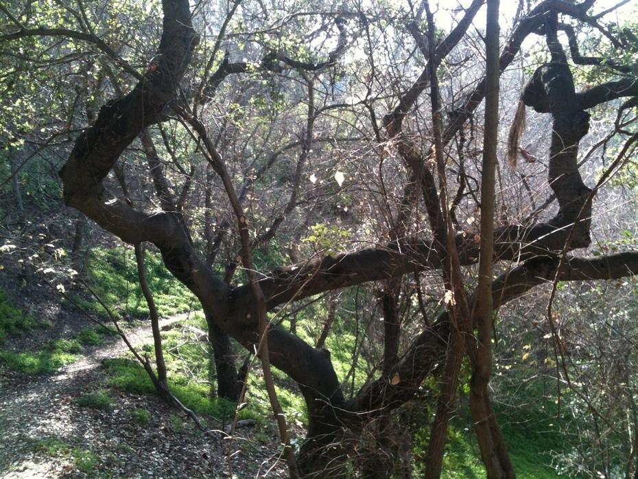 Secret Stairs: Secret Stairs: Fellowship Park in Echo Park Park in Echo Park