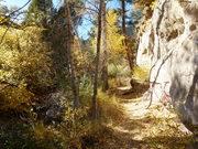 More Fall foliage on Falcon trail
