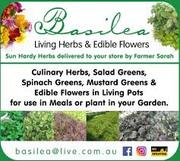 Basilea Farm Open Day