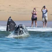 Sharing the Whales of Southern California