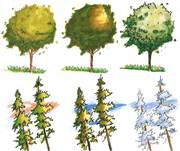 "Landscape Study ""Seasonal"" 2"