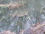 Pole za Hornodvorskou - ďalšia zaplavená šachta 2