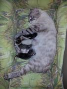 Maman Croustade avec ses 6 bébés