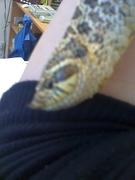 Reptile's rock!