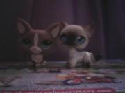 Littlest Pet Shop Luvers!