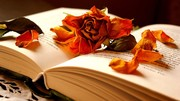 flowers-memories-flowers-book-rose-yellow-images