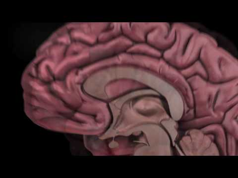 The Human Brain: How We Decide