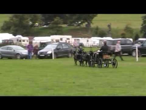 Miniature Horses Team Driving