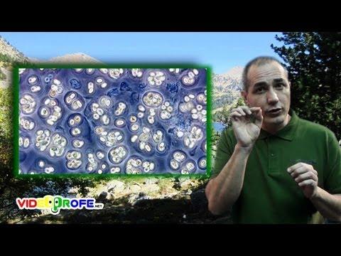 3º Conocimiento del Medio: 02. Tipos de seres vivos Videoprofe.net