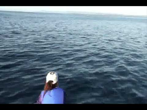 Whales and dolphins playing around our boat