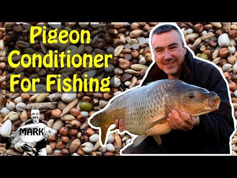 Preparing Pigeon Conditioner for Carp Fishing