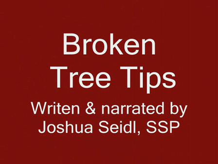 broken treetips