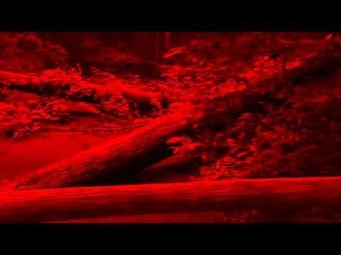 Little dance of the golden dragon-video-2012.