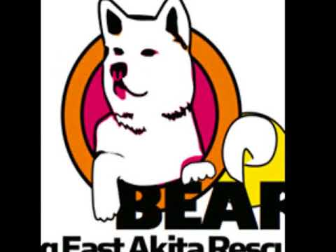 Big East Akita Rescue Dedication-Akita Soulshine