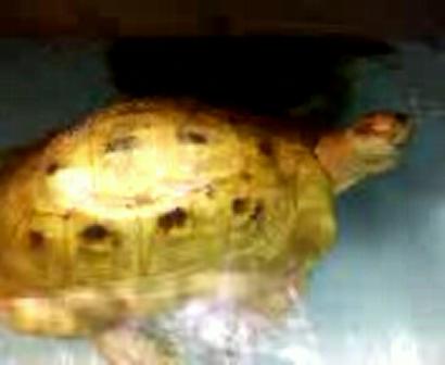 pudaah (tortoise) & rioux (turtle) wildin. SV A0035(0)