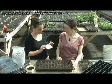 Seed Starting Tips from High Mowing Organic Seeds