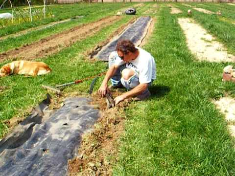 Boulder Belt Eco-Farm: How to Lay Drip Tape and Plastic Mulch by Hand, Pt  4