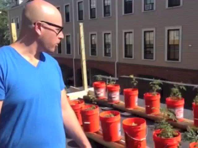 HOMEGROWN.org Gets a Tour of Matt's Subirrigated Roof Garden