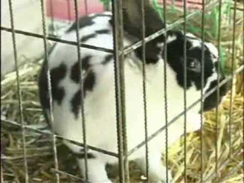 Easter bunnies, chicks & lambs