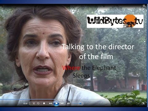Where the Elephant Sleeps-A talk with the Director of the movie