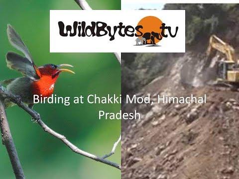 Birding at Chakki Mod, Himachal Pradesh
