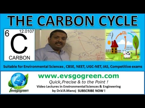 Carbon Cycle an important Nutrient Cycle