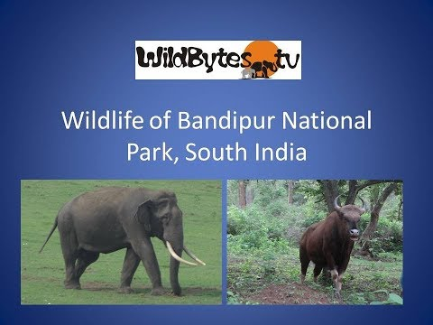Wildlife of Bandipur National Park
