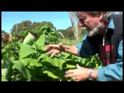 Food forest Layers with Jim channon