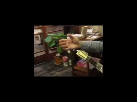 """Froggy Went A Courtin'"" Rambling Steve Gardner Live Lafcarta Ohern Celebration Zushi, Japan"