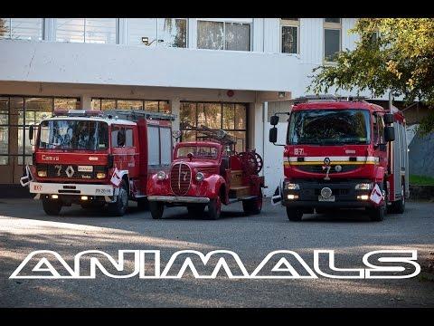 SÉPTIMA VALDIVIA - ANIMALS (FIRECAM)
