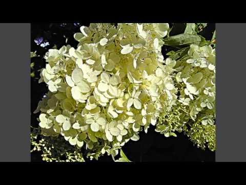 Blumen.mp4