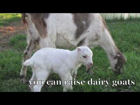 Raising Goats Naturally trailer