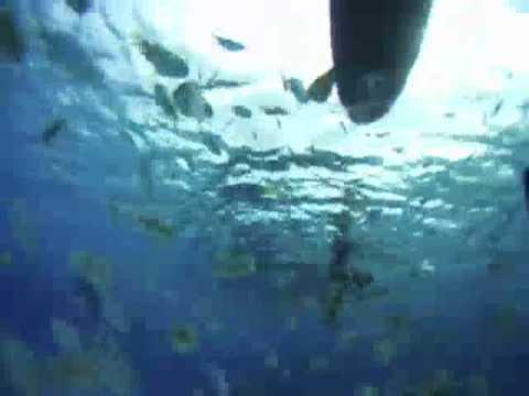 Sup in Tahiti
