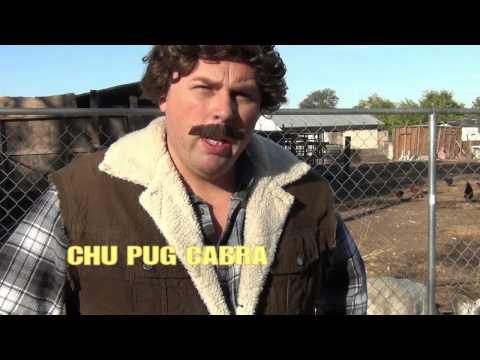 chupugcabra