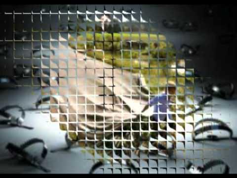 ΤΡΟΧΙΑ ΘΑΝΑΤΟΥ - ΩΡΙΩΝΕΣ   [troxia thanatou - oriones ]