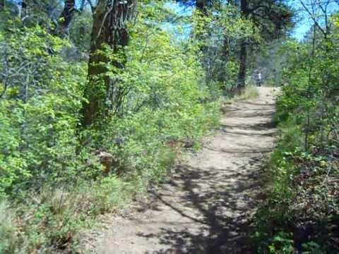5K start at the Big Mountain Trail Run