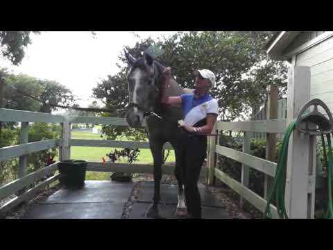 How to Keep Flies Off Your Horse While Riding