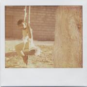un albero 2 corde 1 asse
