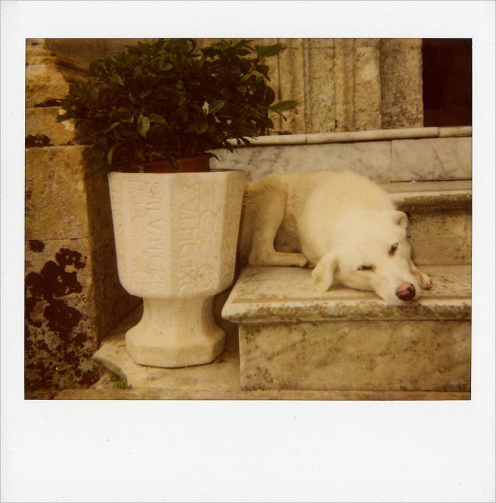 """mondo cane n° 5 - """"u cani"""" sulle scale della chiesa di S.Corrado f.m."""