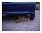 intermezzo siciliano - siesta