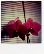 les fleurs du mal 007