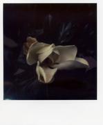 les fleurs du mal 004