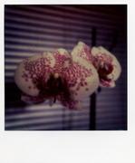 les fleurs du mal 005