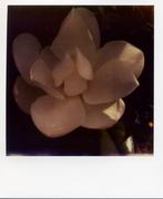 les fleurs du mal 003