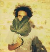 Come le foglie