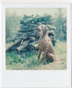 wilson & woodpile