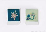 Antistress - Ricordi fiori - 2 Polaroid (Impossible 600 color) - 2017